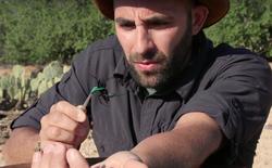 Anh chàng này tự cho ong bắp cày, kiến lửa, bọ cạp và nhiều loài vật khác đốt mình để làm thí nghiệm cho người khác xem