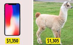 [Vui] Tiền mua iPhone X bằng 2393 cái đùi gà, tiền mua xe Tesla S đổi được cả hòn đảo?