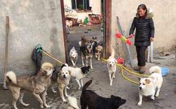 Trung Quốc: Gia đình ly tán, bán hết nhà cửa vì cưu mang 130 con chó bị bỏ rơi