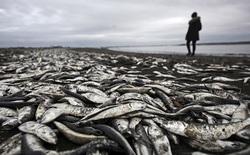 Chính vì con người, lượng oxy trong các đại dương đã giảm khoảng 80 tỷ tấn và vẫn đang tiếp tục
