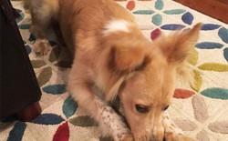 Nhà nuôi chó, chớ dại mà dùng robot hút bụi, nếu không sẽ lãnh hậu quả kinh khủng này!