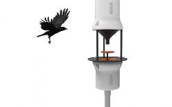 Startup với sáng kiến dùng chim dọn rác thuốc lá