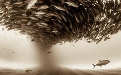 Chiêm ngưỡng 33 tấm ảnh đẹp ngây ngất từ cuộc thi Sony World Photography Awards 2017