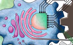 Một kỷ nguyên điện tử mới trong sinh vật sống, không mạch kim loại và không vật liệu bán dẫn