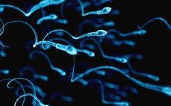 Các nhà nghiên cứu tìm ra công thức toán học xác định được cách tinh trùng đàn ông bơi như thế nào