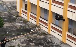 Nghe giáo sư Vật lý người Mỹ giải thích vì sao đặc công Việt Nam có thể leo tường chỉ nhờ một cái sào