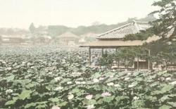 Tokyo từng yên bình đến lạ thường trước khi trở thành đô thị sầm uất nhất thế giới