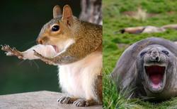 Cười xả tress hiệu quả khi bạn biết động vật cũng có lúc đáng yêu thế này