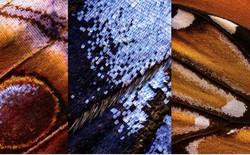 Ghép 2100 ảnh chụp mới được 1 tấm hình cánh bướm ảo diệu như thế này đây!