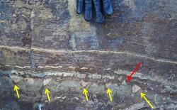 Mảnh hóa thạch có niên đại 3,7 tỉ năm, lâu đời nhất trên Trái Đất có thể chỉ là cục đá nhiều tuổi