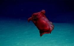 """Các nhà khoa học lần đầu phát hiện """"quái vật gà không đầu"""" ở Nam Cực"""