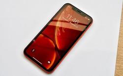 Hóa ra chữ R trên iPhone XR chẳng có ý nghĩa gì cả