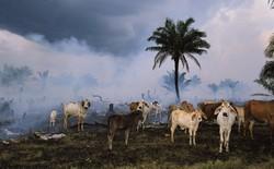 Báo cáo cho thấy, nhân loại đã khiến Trái đất mất 60% số lượng động vật trong hơn 40 năm qua