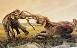 Trận tử chiến cuối cùng: 2 con ma-mút đực đánh lộn cắm ngà vào nhau rồi cùng hóa thạch suốt 12.000 năm