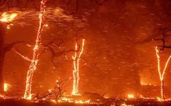 Cháy rừng ở California: Mỗi giây thiêu rụi cả một sân bóng - tại sao lại lan nhanh khủng khiếp đến thế?