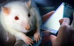 Đã có bằng chứng rõ ràng: Sóng điện thoại liên quan đến ung thư ở chuột - nhưng nó không đánh giá được nguy cơ với con người