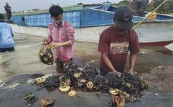 Tìm thấy 1000 mảnh nhựa và 2 đôi dép tông trong bụng cá nhà táng chết dạt vào bờ biển Indonesia