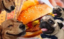 Twitter của Burger King đăng toàn thứ ngớ ngẩn trong nhiều giờ, nghi là chiêu trò quảng cáo đồ ăn cho chó