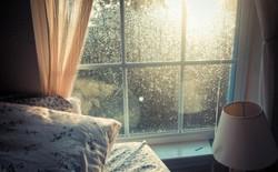 Ánh sáng Mặt Trời sẽ làm giảm lượng vi khuẩn có trong nhà bạn, hãy mở cửa ra để đón nắng!