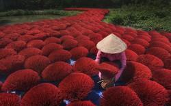 10+ khoảnh khắc tuyệt đẹp đoạt giải thưởng ảnh Siena quốc tế, 2 trong đó được chụp ở Việt Nam