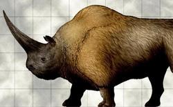 Kỳ lân Siberia - loài tê giác nặng tới 3,5 tấn tuyệt chủng do biến đổi khí hậu, không phải do con người