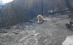 Trở về sau hỏa hoạn California, gia chủ phát hiện ra có một thành viên gia đình vẫn ngồi đợi mình về