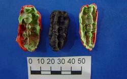 Miếng kẹo cao su 9.500 năm tuổi này có gì thú vị khiến các nhà khoa học nhảy vào nghiên cứu?