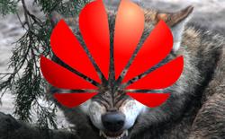 Văn hóa Chó sói - Động lực đưa Huawei vươn ra toàn cầu và cái giá phải trả là rắc rối hiện tại