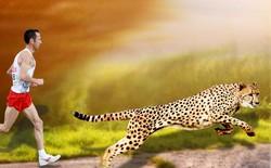 Con người dĩ nhiên không nhanh bằng loài báo, nhưng bạn có biết tại sao?