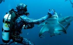 """Cận cảnh khoảnh khắc hiếm có khi các thợ lặn chơi đùa với """"sát thủ đại dương"""""""