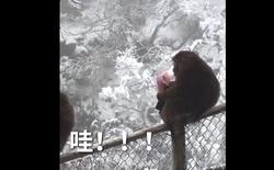 Đây là lý do vì sao phải cất ví cho kỹ khi đi thăm thú những nơi có khỉ