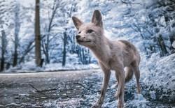Ghé thăm Vùng Đất Cấm Chernobyl qua góc nhìn của máy ảnh hồng ngoại