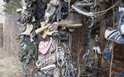 Khu rừng bí ẩn ở Canada: Hàng trăm đôi sneakers bị đóng đinh lên cây, không ai biết lý do vì sao