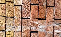 """Các nhà khoa học đã tạo ra một loại """"siêu gỗ"""" cứng và bền chả kém gì sợi Carbon"""