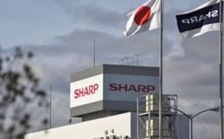 Sharp trở thành hãng điện tử Nhật Bản đầu tiên sản xuất hàng loạt màn hình OLED, nhưng vẫn bị các hãng Hàn Quốc bỏ xa