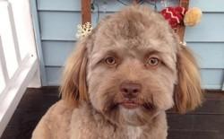 Chuyện lạ của tạo hóa: Chú chó có gương mặt giống người