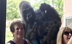 Chú Gorilla khiến cộng đồng mạng cười ngất với màn đi bằng 2 chân để tránh bị bẩn tay khi ăn