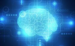 Bạn có biết vỏ não của mình chứa tới 17 tỷ cái máy tính không?