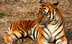12 loài vật hoang dã đang đối diện nguy cơ tuyệt chủng, biến mất hoàn toàn khỏi Trái Đất