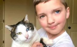 Cùng màu mắt, cùng bị tật ở miệng, số phận đã an bài cho cậu bé đáng thương và chú mèo hoang trở thành tri kỷ
