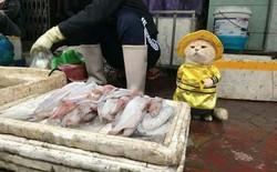 Chú mèo bán cá tên là Chó ở Hải Phòng gây sốt mạng xã hội vì quá dễ thương