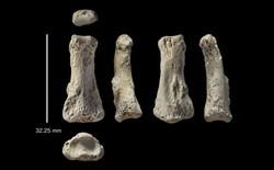Một mẫu xương ngón tay 88.000 năm tuổi có thể khiến lịch sử loài người phải viết lại