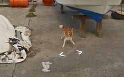 Chú chó tinh nghịch chạy theo xe Google Street View tại Nhật, tấm ảnh nào cũng đòi có mặt khiến cư dân mạng thích thú