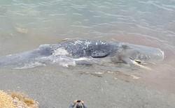 Hình ảnh gây sốc: Xác cá nhà táng dài 10m bị chết do ăn phải 30 kg nhựa được tìm thấy tại bờ biển Tây Ban Nha