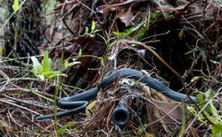 Bức ảnh rắn trườn ngang họng súng lính bắn tỉa gây sốt bất ngờ
