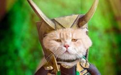 Chú mèo tên Chó lại hóa thân thành siêu anh hùng Avengers, được bạn bè Thái Lan cưng nựng, xuýt xoa hết lời