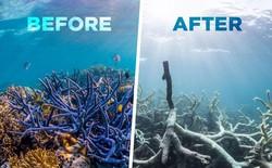 Viễn cảnh kinh hoàng nào đón đợi ta khi toàn bộ rạn san hô trên Trái đất này biến mất?