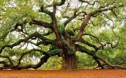 """Các nhà khoa học khám phá """"nhịp tim"""" của cây"""
