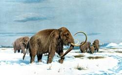 Các nhà khoa học muốn sử dụng gen của voi ma mút để tạo ra giống voi mới có thể sống sót trong điều kiện lạnh giá