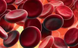 Đây là thứ băng gạc của tương lai: bạn tiêm nó vào người để cầm máu